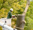 Important Things To Consider When Looking For Tree Removal Services