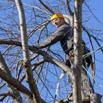 Tree Service – Finding the right company